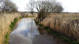 Floods between the Exminster car park and the canal path mean we have to take the road to Countess Wear
