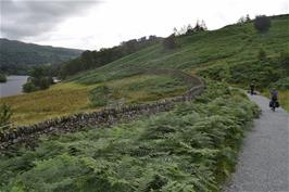 Dillan follows the cycle path around Rydal Water towards Ambleside